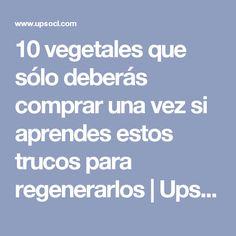 10 vegetales que sólo deberás comprar una vez si aprendes estos trucos para regenerarlos | Upsocl
