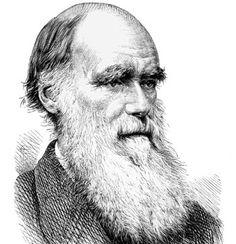 Darwin - Google Search