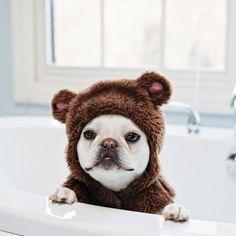Theobonaparte #frenchies #bear