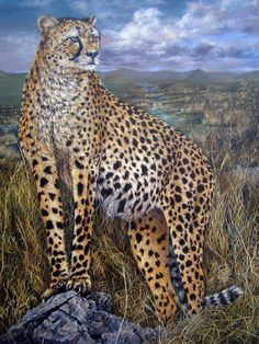 "Wildlife art ""Premonition"": Realistic Acrylic Cheetah Painting by Dominique Wilkins Dominique Wilkins, Wildlife Art, Figurative Art, Cheetah, Giraffe, Fine Art, Portrait, Artist, Painting"