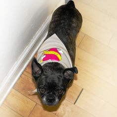 Mother's Day Dog Bandana with Dog Mom Tattoo by doggydesign