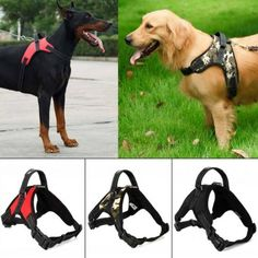 Best Puppies, Dogs And Puppies, Dog Belt, Cat Shampoo, Pet Dogs, Pets, Black Lab Puppies, Animal Fashion, Dog Harness