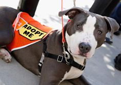 A furry friend from Sunday's event with the @ASPCA to honor National Adopt-a-Shelter-Dog Month.