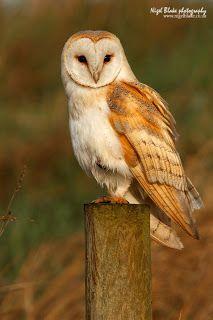 Nigel Blake nature photography