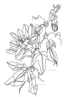 The 455 best Embroidery patterns 3 images on Pinterest