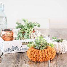 Crochet Succulent Pumpkin Planter - Free Pattern