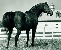 CITATION 1948 Triple Crown Winner, Horse of the Year, Thoroughbred Horse Racing's First Millionare. 45 starts, 32 wins, 10 seconds, 2 thirds.