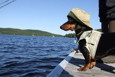 My New Fishing Outfit by Crusoe the Celebrity Dachshund, via Flickr @Jessica Grinsteinner Treffry #bedachshing