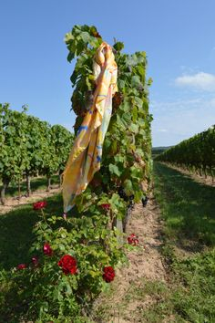 L'Eté visits a Cahors vineyard on a glorious summers day. With quotations from Johnny Mercer and William Shakespeare - about wine of course! Roses, Wine, Texture, Abstract, Artist, Crafts, Surface Finish, Summary, Manualidades