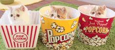 kitty popcorn anyone