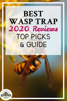 Best Wasp Trap: 2020 Reviews (Top Picks) Rabbit Food List, Best Rabbit Food, Wasp Traps, Cattle Barn, Farm Lifestyle, Horse Feed, Homestead Farm, Cattle Farming, Baby Horses