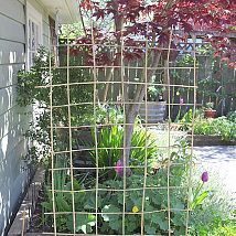 bamboo stakes and then weave others through for peas
