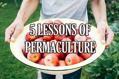 5 Lessons of Permaculture to use in our Society | AltHealthWorks.com