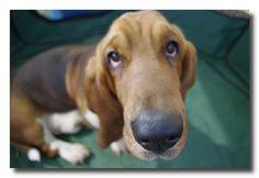 cane nasone - big dog nose | Flickr - Photo Sharing!