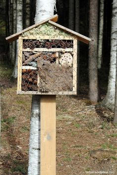 DIY hyönteishotelli Insect Hotel, Garden Landscaping, Balcony Gardening, Diy Projects To Try, Bird Feeders, Diy And Crafts, Sweet Home, Yard, Landscape