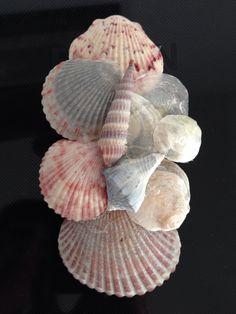 :shells: