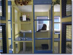 Image detail for -... Birch Kennels introduces a new larger cattery to board your cats