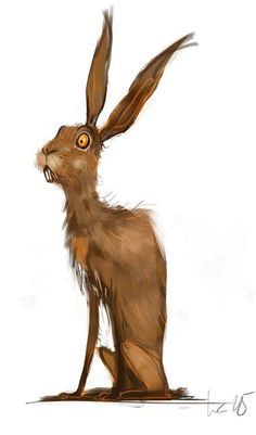Startled hare by Wiebke Rauers