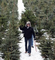Between January and September 2011, $79.7 million worth of artificial Christmas trees were imported from China to the United States. However, real trees still outsell artificial trees 3-to-1. To accommodate the demand, Christmas tree farms in North America planted an estimated 40 million new seedlings in the winter and spring of this year to replace harvested trees and meet future needs.