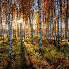 Suecia ^amanecer