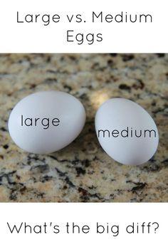large vs medium egg difference #HATCHforHunger