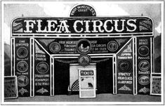 Flea Circus | Article by Earl Chapin May - Popular Mechanics Feb 1928 - Submitted by ...