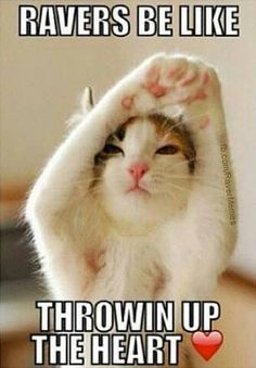 Cat yoga from Anna B Baby Animals, Funny Animals, Cute Animals, Beautiful Cats, Animals Beautiful, Kittens Cutest, Cats And Kittens, Gatos Cats, Photo Chat