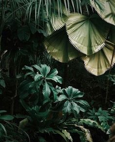 Dark Green Jungle Leaves ....
