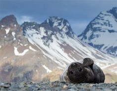 Baby seal (© Ondrej Zaruba, National Geographic Photo Contest)