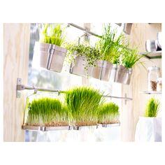 kitchen herb garden raw 0399278 ph119701 s5jpg