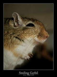 Smiling Gerbil. by Lenziel by Gerbil-Club on DeviantArt