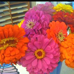 Yellow, Fuschia, Orange, and Red Zinnias