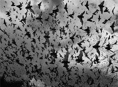 Amazingly cool Halloween/creepy/gothic images.