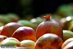 The other iran - Harvesting Pomegranate in Sangan Village – Iran