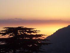 Cedars of Jaj - Lebanon.