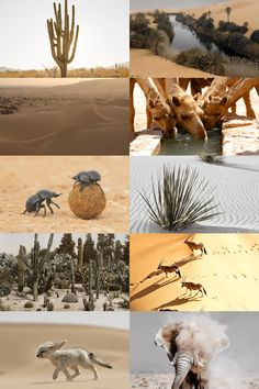 ecosystems → hot desert a barren area of land where little precipitation occurs and consequently living conditions are hostile for plant and animal life. The lack of vegetation exposes the unprotected surface of the ground to the processes of denudation. About one third of the land surface of the world is arid or semi-arid.