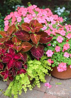 How to plant beautiful container gardens #garden #ideas skiptomylou.org