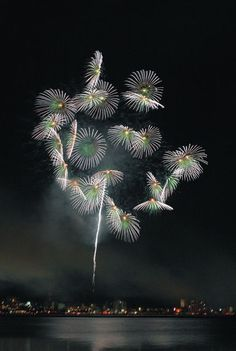 Fireworks ( Lake Suwa fireworks display ,Japan ) Author: Hitomi Zama. Best Fireworks, Fireworks Festival, Festival Lights, Sky Gazing, Fire Works, Sunflower Art, Hanabi, Bonfire Night, Light Of Life