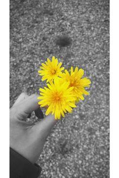 Butun bahar aranjmanlarinin en sevilen parcasi suphesiz kir cicekleri.  Insanin icini acan guzel renklerin simdi tam mevsimi. Sari renk sevenlerin vazgecilmezi #kircicegi 🌼 hepimize gelsin!  Of course, #wildflowers are the most indispensable between all the spring flower arrangements. To all #spring and yellow lovers, #cheers !  Natürlich sind #wildeblumen die unentbehrlichste zwischen allen Frühlingsblumenarrangements. Für alle #frühling und gelbe Lieber, #prost !