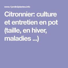 Citronnier: culture et entretien en pot (taille, en hiver, maladies ...)