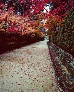 いいね!26件、コメント4件 ― Hanamaru Yukiさん(@hanamaruxyz)のInstagramアカウント: 「#雨 の #高野山 #大伽藍 #壇上伽藍 #紅葉 #落ち葉 #落ち葉アート #giappone #koyasan #inviaggio #pioggia #piove #hanamaruxyz…」