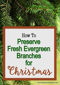 No more pine needles everywhere!!  It is easy and inexpensive to preserve fresh evergreen branches for Christmas!!