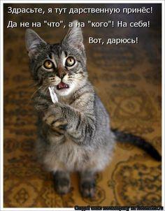 Новая котоматрица (28 фото)