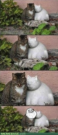 forever alone kitty
