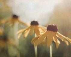 Flower Photograph 8x10 Dreamy Fall Daisy Print, Brown, Gold, Yellow, Green Decor, Autumn Black Eyed Susan Print, tbteam. $25.00, via Etsy.
