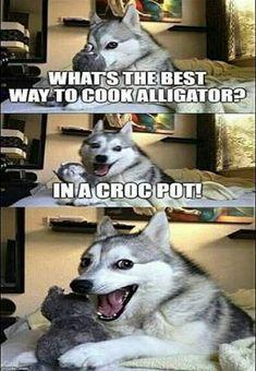 Husky Humor, Funny Husky Meme, Funny Dog Jokes, Cute Jokes, Dog Quotes Funny, Funny Jokes For Adults, Funny Jokes To Tell, Funny Laugh, Funny Memes