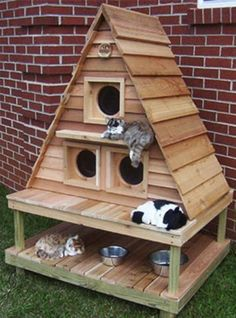 Triangle cats woodhouse