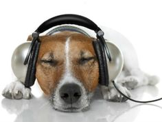 Dog With Headphones Wallpaper – Image Library Electronic Mouse Repellent, Mice Repellent, Buy Headphones, Dog Phone, Dog Information, Puppy Images, Music Images, Dogs Golden Retriever, Chihuahua Dogs
