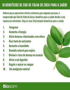 Clique na imagem para ver os 10 Benefícios de Chá de Folha de Coca para a Saúde  #coca #folhadecoca #chadefolhadecoca #alimentos #alimentação #alimentacaosaudavel #saúde #bemestar