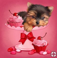 More About The Affectionate Yorkshire Terrier Pups Exercise Needs Yorkies, Biewer Yorkie, Yorkie Puppy, Terriers, Yorky Terrier, Puppy Crafts, Animals And Pets, Cute Animals, Yorkshire Terrier Puppies